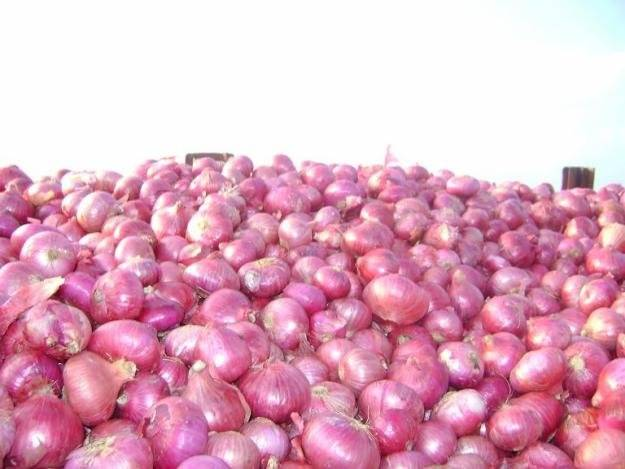 Fresh 2016 New Red Onion