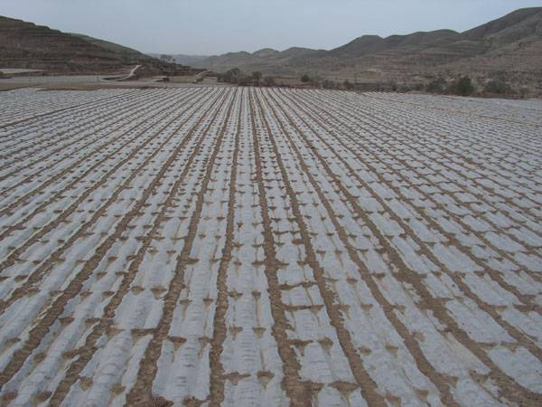 anti-UV weed control PE mulch film