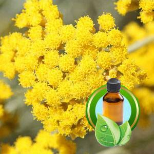 100% Pure Helichrysum Essential Oil