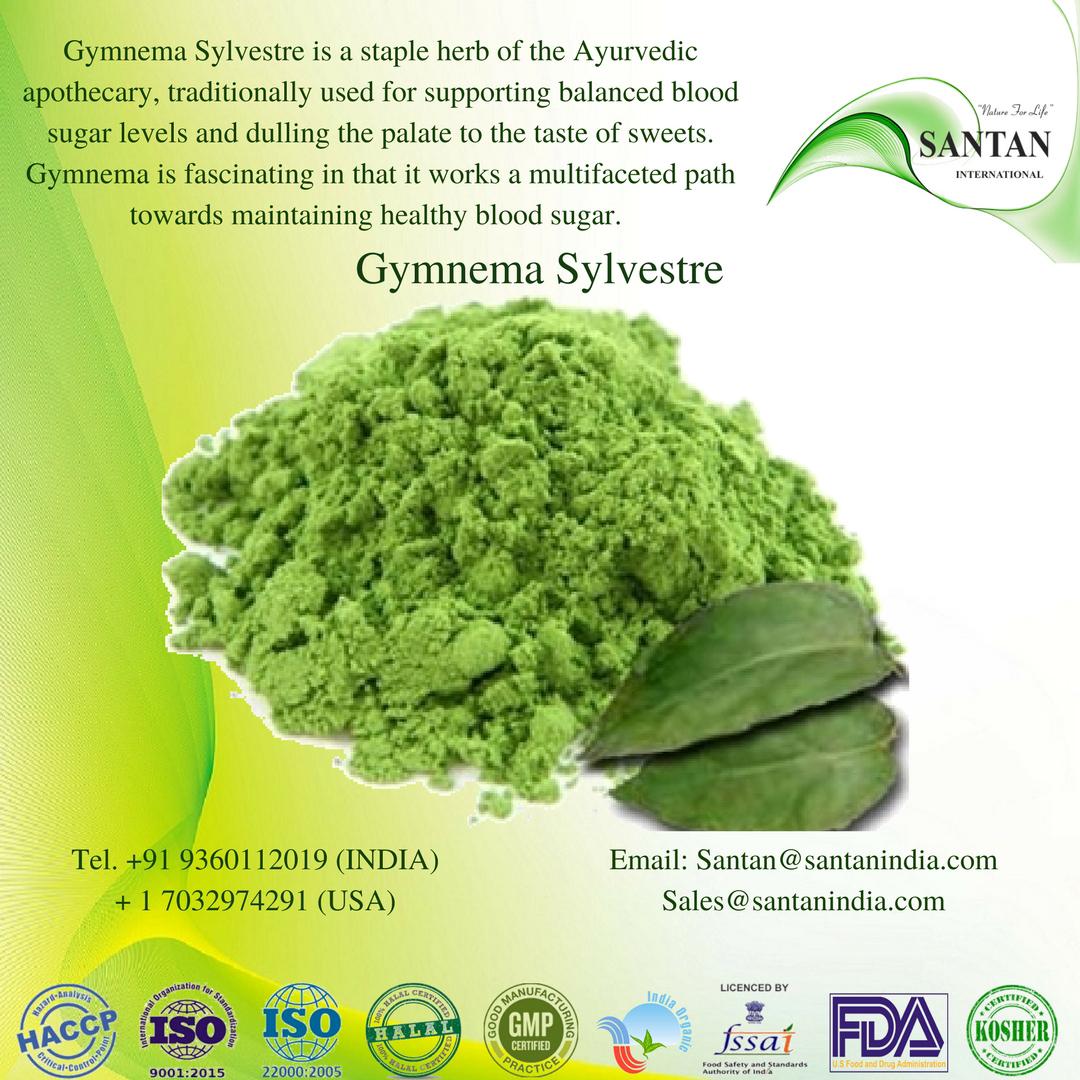 Gymnema Sylvestre Powder