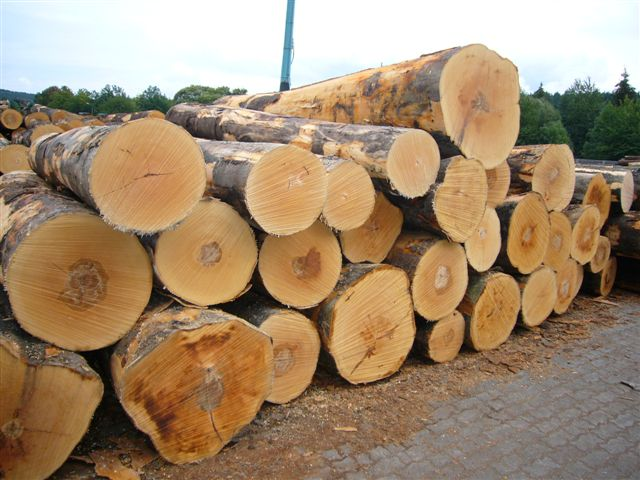 African hard woods, logs, bubinga, Iroko, Tali, Doussie, sapelli and many other