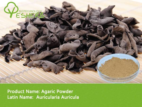 free sample high quality Agaric Powder