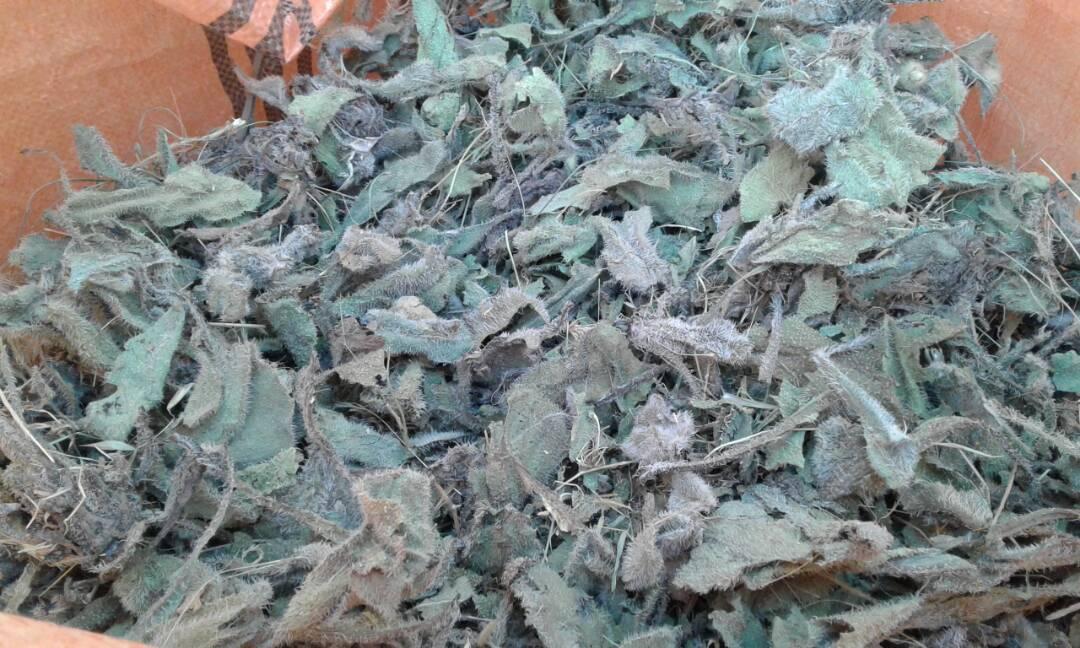 Borage leaves