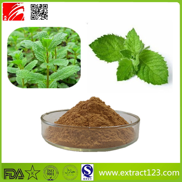 High Quality Mint Leaves Extract Powder