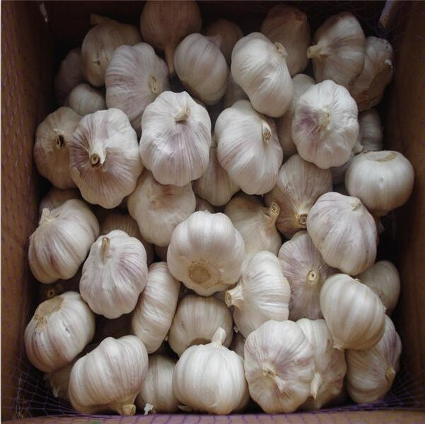 Jinxiang red garlic with garlic specifications from garlic exporters China