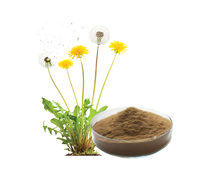 Organic Dandelion Extract EOS/NOP Organic certification with TC/ COI