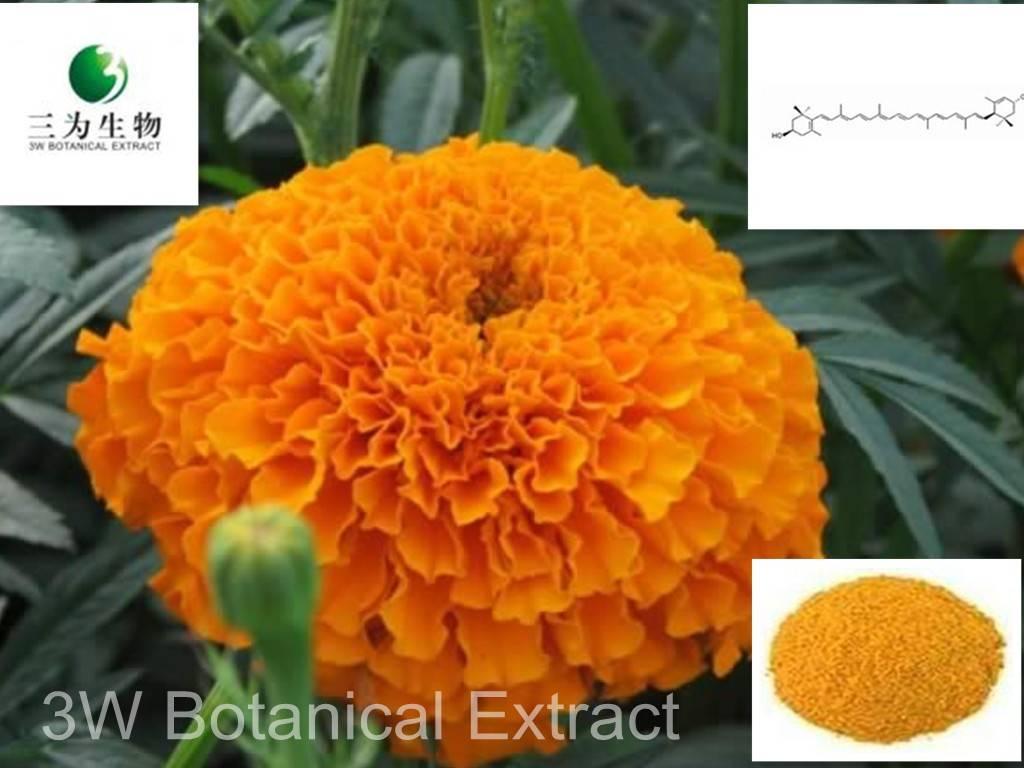 Marigold Extract(sales05@3wbio.com)