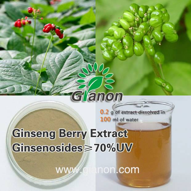 Panax Ginseng Berry Extract