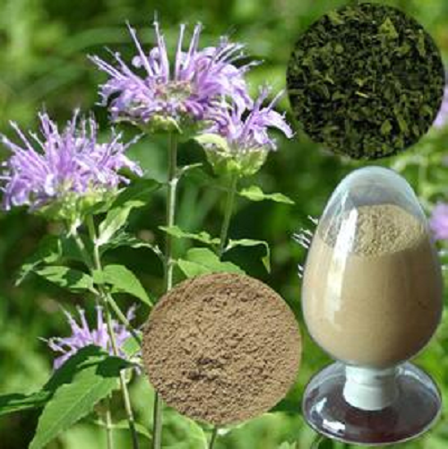 Lemon Balm Extract 10:1