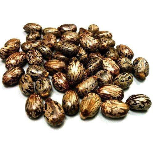 caster seed