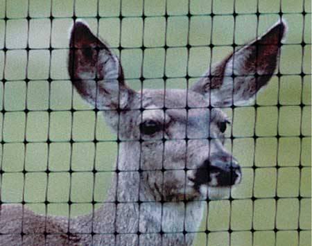 Plastic netting garden deer field fence /garden deer fence