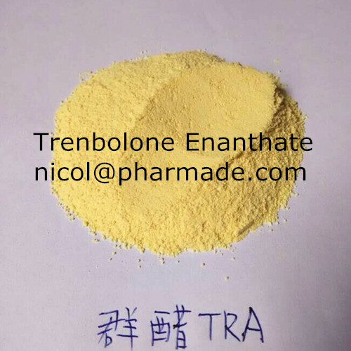 99% Purity Trenbolone Enanthate Steroid Hormone Powder