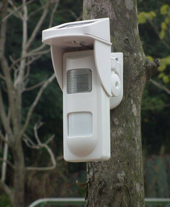 Outdoor Independent Voice Alarm Motion Detectors With Solar Power