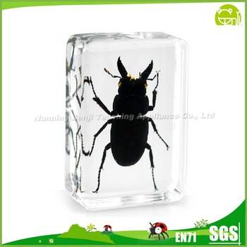 Real Insect Resin Crafts Black Stag Beetle insect Block Paperweight Factory