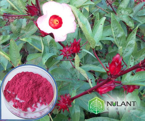 Hibiscus flowers extract 20:1