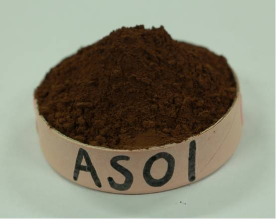 Supply Alkalized Cocoa Powder 10/12 AS01 For Sale