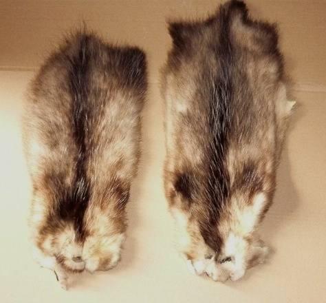 Opossum skin