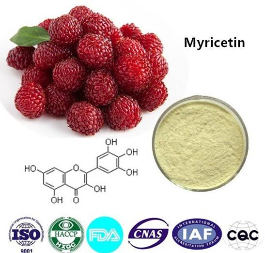Myricetin  98% HPLC CAS NO:529-44-2 1kg/bag