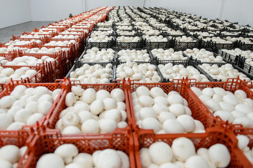 mushrooms wholesale