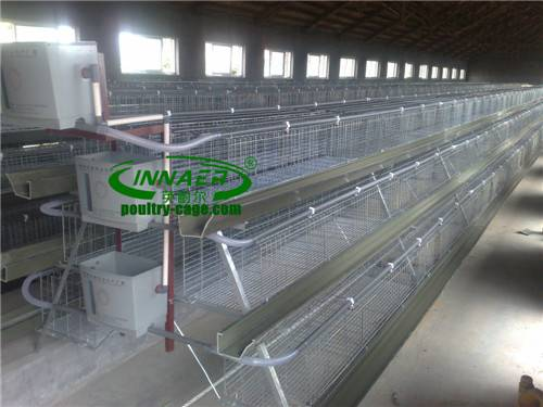 Broiler Cage