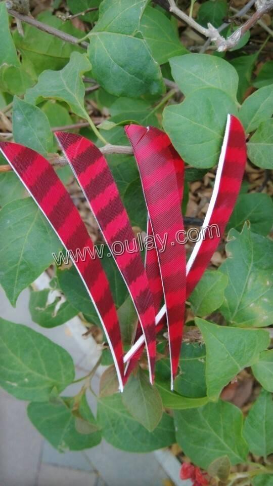 Parabolic turkey feathers for diy hunting arrows