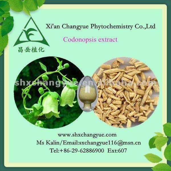 100% natural codonopsis pilosula root extract powder 10:1