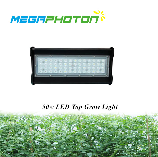 Megaphoton 50w 1ft Top Led Grow Light For Hydroponic