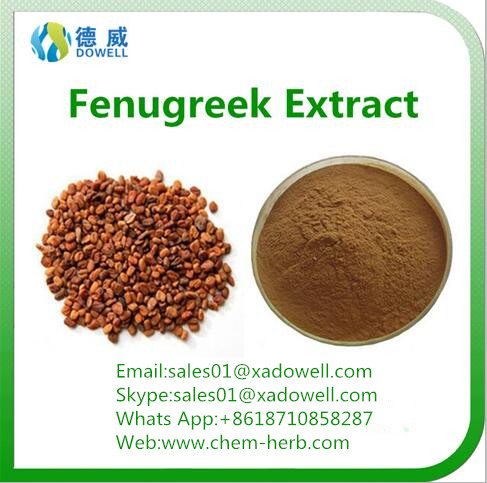 Top quality Natural Organic Fenugreek seed Extract