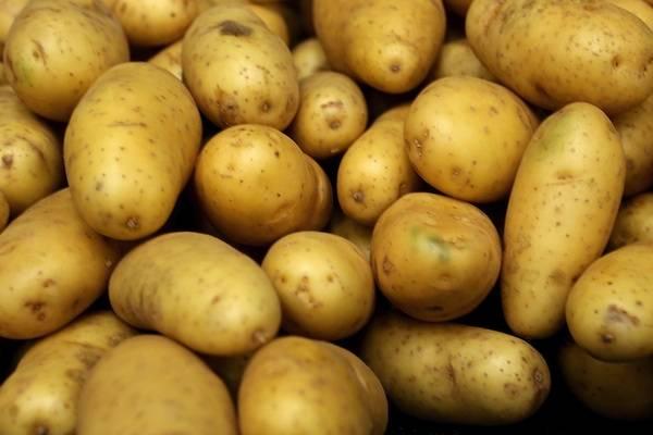 Fresh Farm Washed Potatoes