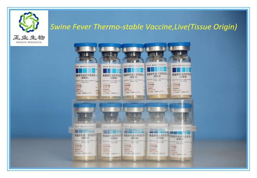 Swine Fever Thermo-stable Vaccine,Live(Tissue Origin)