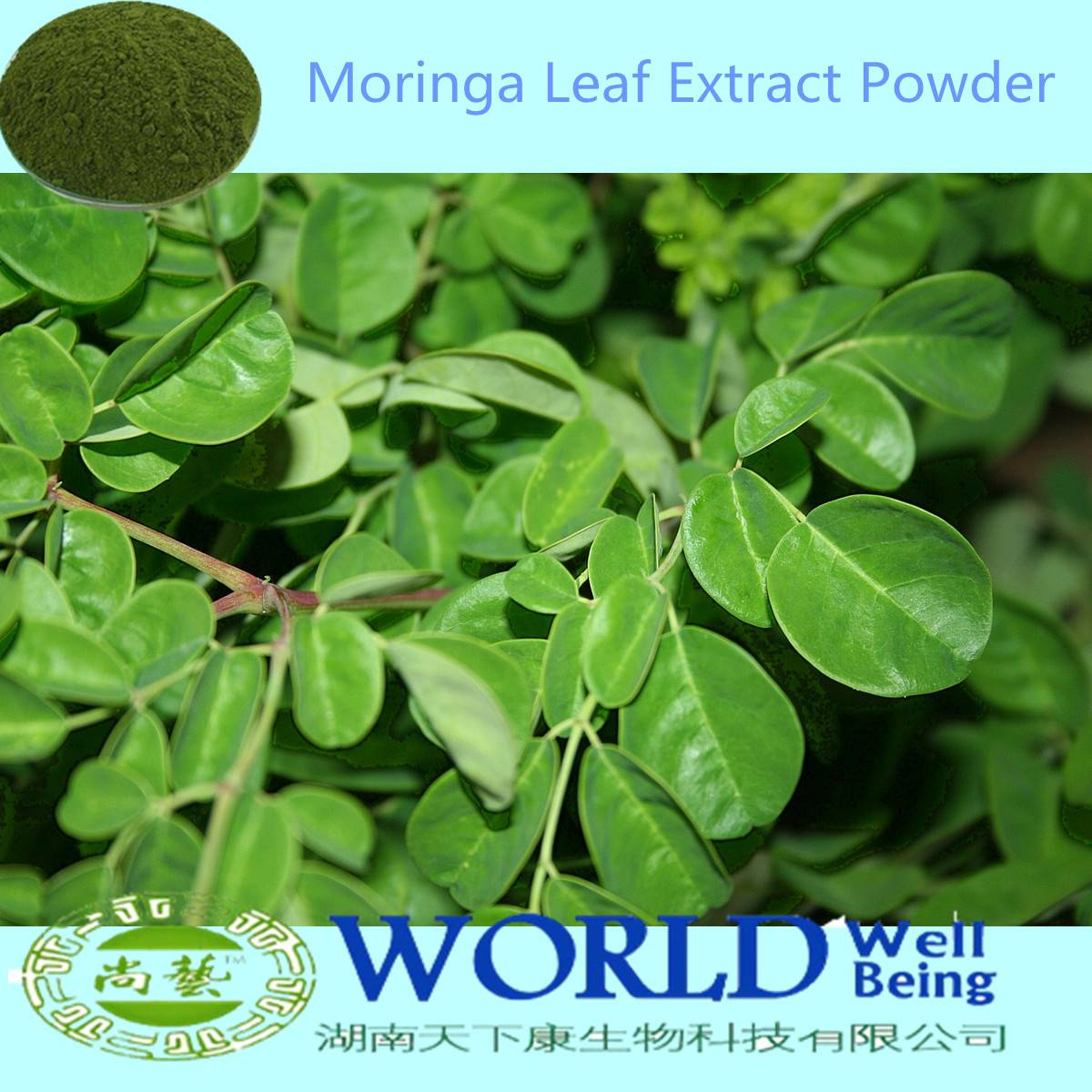 Factory Supply 100% Natural Moringa Oleifera Extract/Moringa Leaf Powder Low Price Moringa Extract P