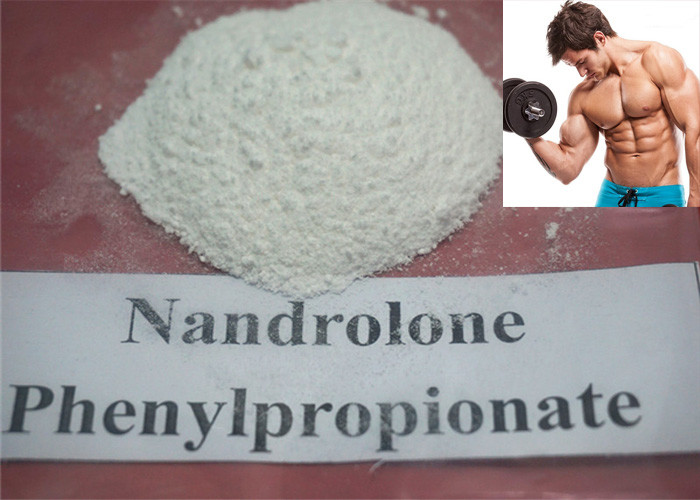 Nandrolone Steroid CAS: 62-90-8 Nandrolone Phenylpropionate, NPP white Raw Powder for Muscle Gaining