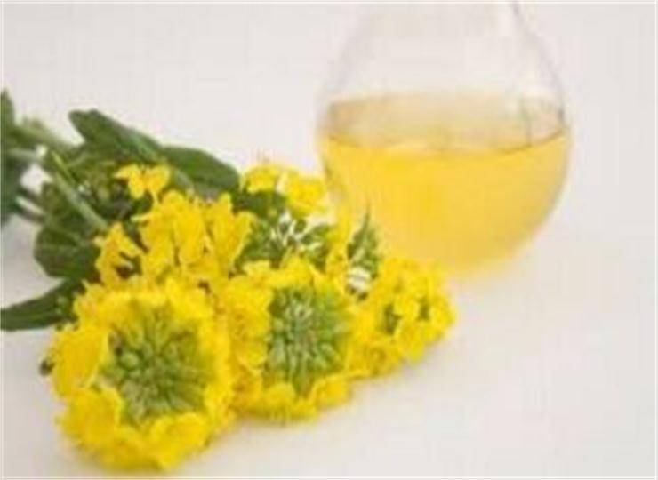 High Quality Pure Refined Rapeseed Oil in China