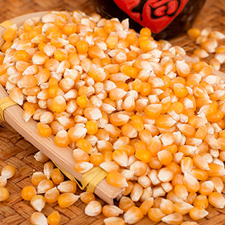 Yellow Dry Corn For Animal or Human Consumption