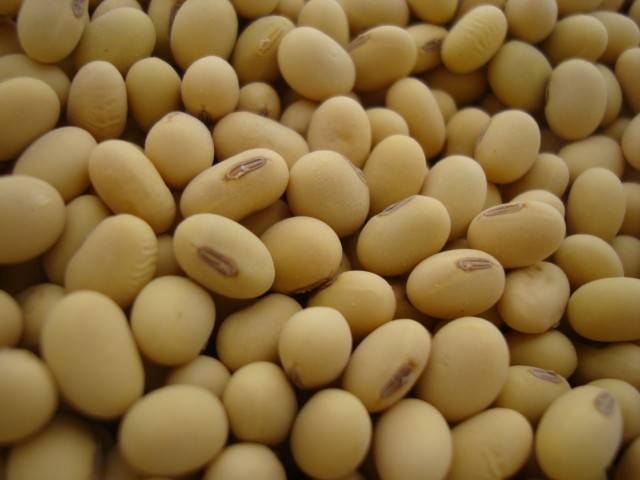 Soybean Extract With purity Soy Isoflavone