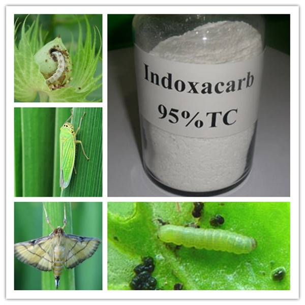 Insecticide Indoxacarb / Agrochemical Indoxacarb 150g/L SC 95%TC
