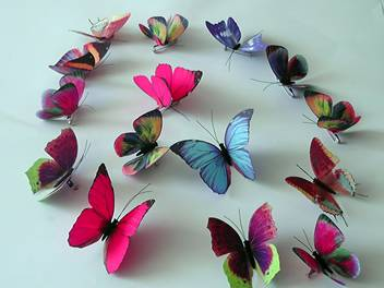 Simulation Butterfly
