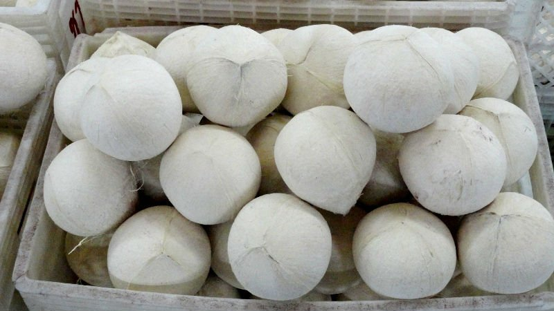 Whole Fresh Young Coconut for sale with good price from Thailand