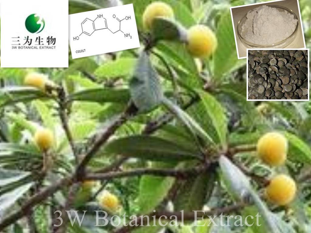 Griffonia Simplicifolia Seed Extract(sales05@3wbio.com)