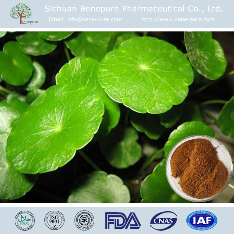 Natural Gotu Kola Extract powder Asiaticoside Centella Asiatica Extract,BENEPURE