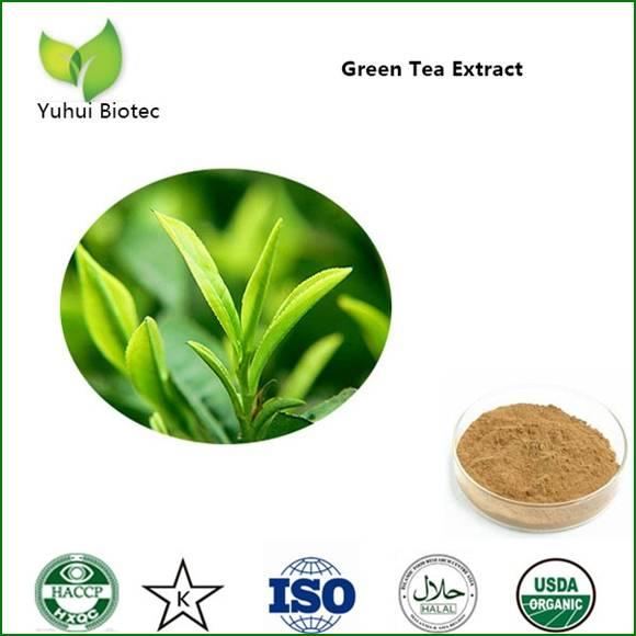 green tea extract,green tea extract powder,egcg,tea polyphenol