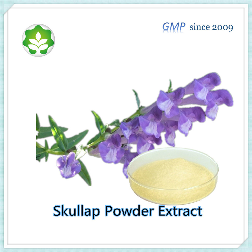 scutellaria baicalin powder extract supply