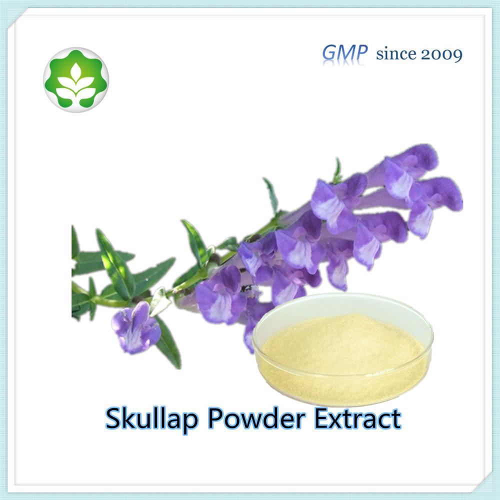 scutellaria baicalin powder extract supply