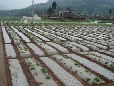 Plastic mulching film agriculture film