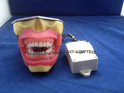 Conduction Anesthesia Model for practice extract and anesthesia