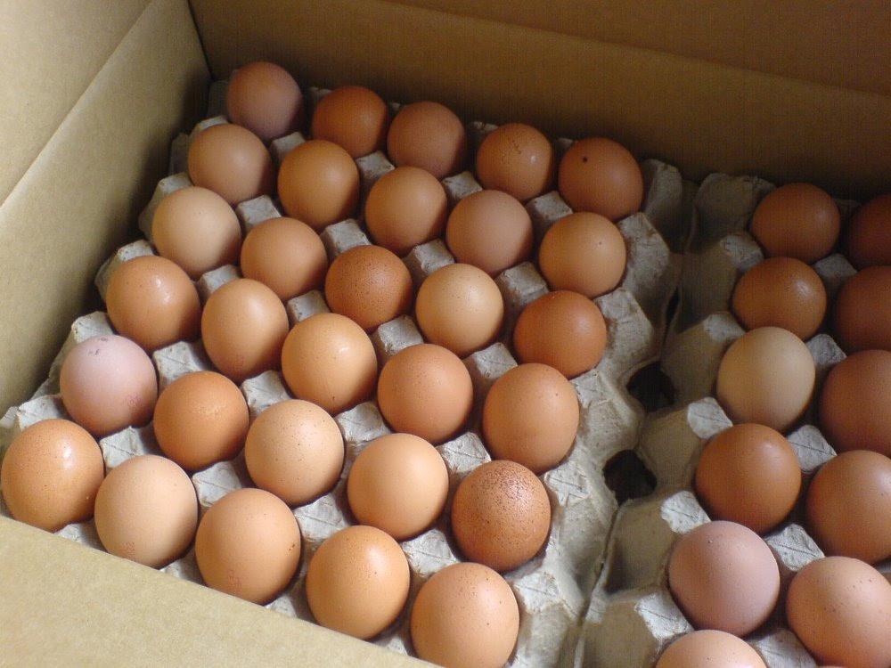Quality Brown Table Eggs / Fresh White and brown table eggs