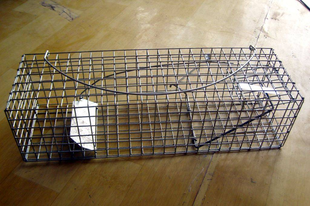 The Single Door Trigger mouse Trap cage---need bait