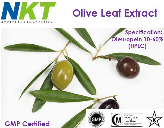 Olive Leaf Extract (GMP Certified)