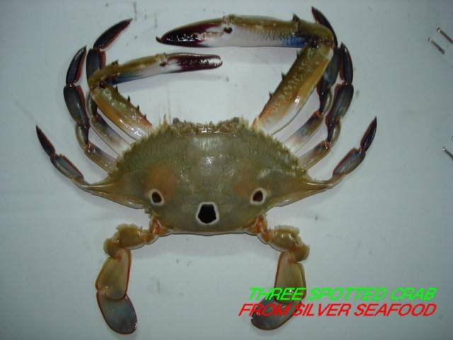 THREE SPOTTED CRABS