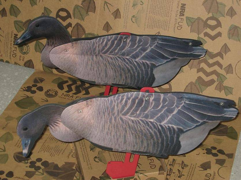 Pink Foot Goose